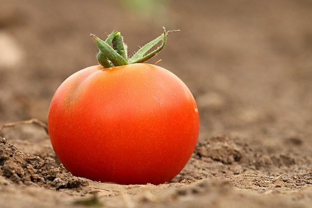 tomato-1531584_640